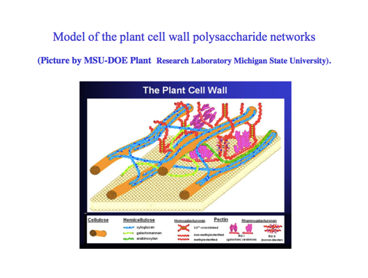 A colorful graphical representation of the entangled components of the plant cell wall.